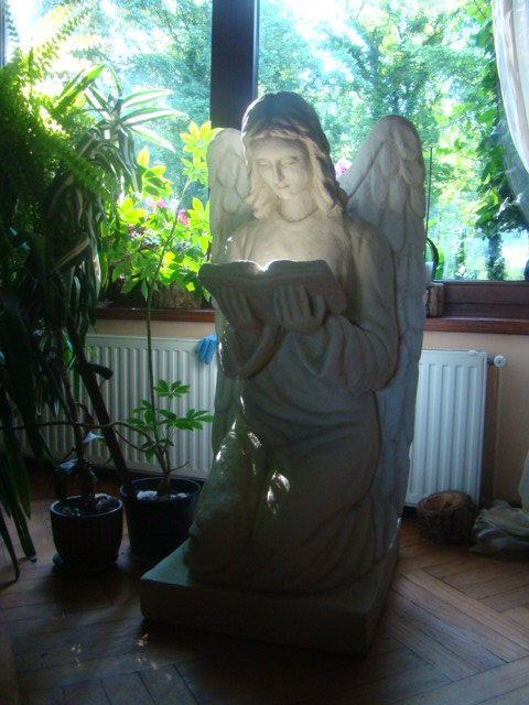 110_Anioł_domowy